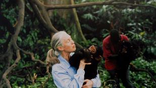 Jane Goodall a Sziget nagyszínpadán buzdít környezetvédelemre
