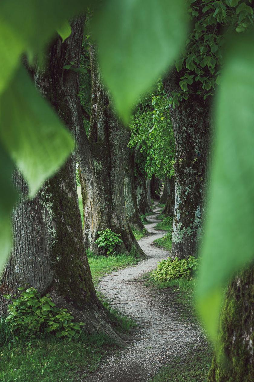 Varázslatos ösvény Bajorországban.