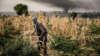 ENSZ: A klímaválság miatt fel kell készülni az élelmiszerválságra is