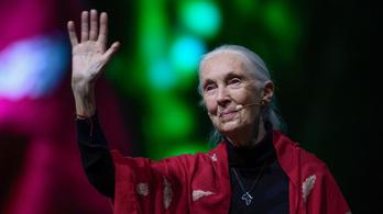 Jane Goodall előadása a Sziget fesztiválon