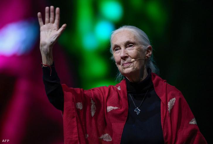 Jane Goodall, Ph.D., DBE, a Jane Goodall Intézet alapítója és az ENSZ békenagykövete