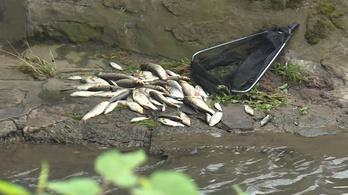 Több ezer hal pusztult el az Eger-patakban