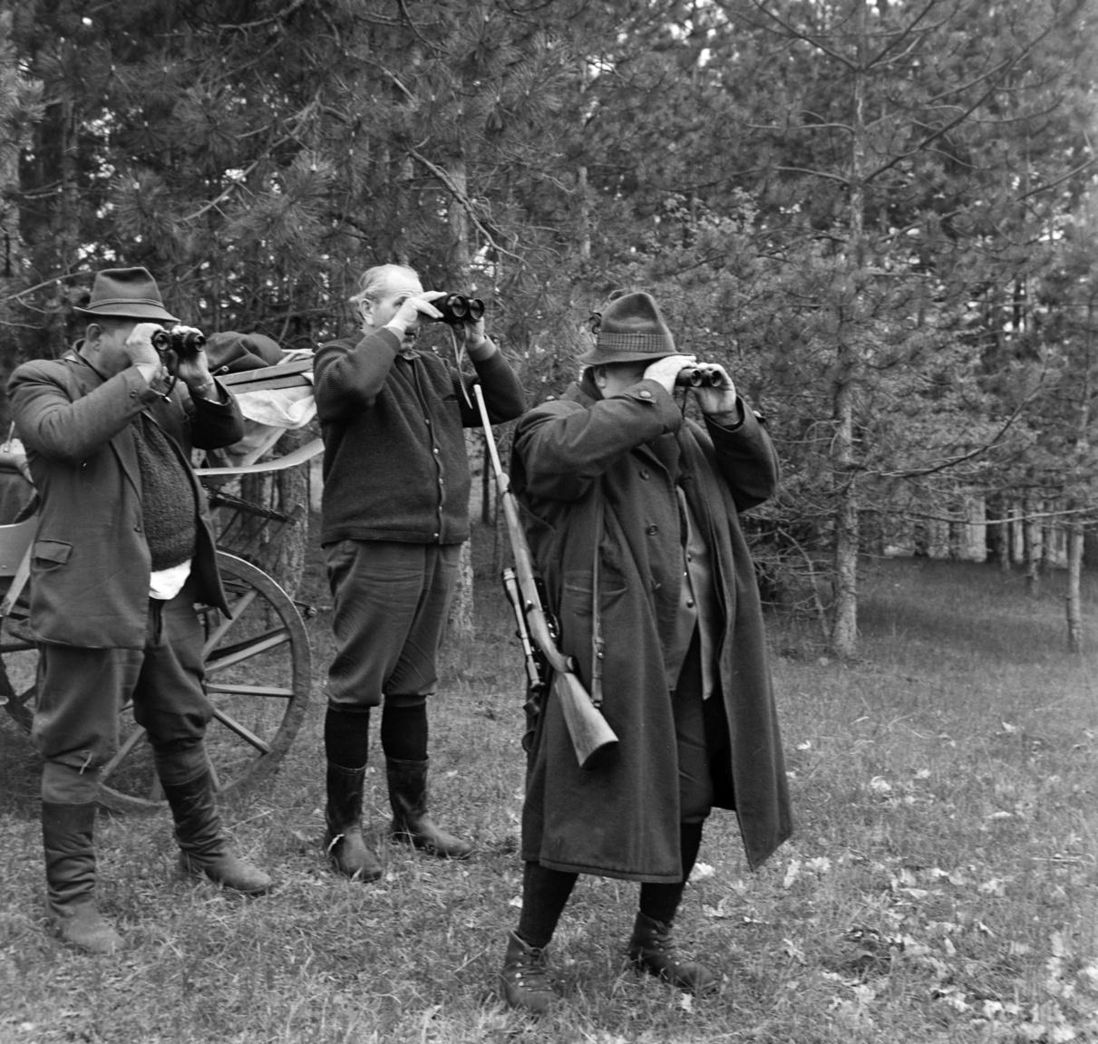 A NSZK-ból érkező vendégek őzbak vadászata a Nagyerdőn, 1965Az elfenekelt kezdőn kívül visszajáró tagjai is voltak annak a hatfős nyugatnémet vadásztársaságnak, amelyről Bojár a vadászati szaklapnak készített fotókat. A rövid cikkből kiderül, hogy a négynapos vadászat során az összesen 1800 darabos nagyerdei őzállományból 34 bakot lőttek ki. A hatvanas évek közepén egyre több külföldi érkezett a magyar vadászparadicsomba, így az élővad befogása és a bérvadászat, a körré épülő szolgáltatásokkal együtt jól jövedelmező iparággá vált. Az ebből származó devizabevétel a kimutatások szerint 1983-ban már meghaladta az 50 millió dollárt.
