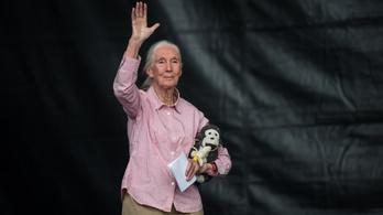 Jane Goodall a Szigeten: Együtt képesek vagyunk rá