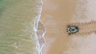 Ez itt nem egy dzsip kereke -  ilyen nyomot hagynak maguk után a teknősök