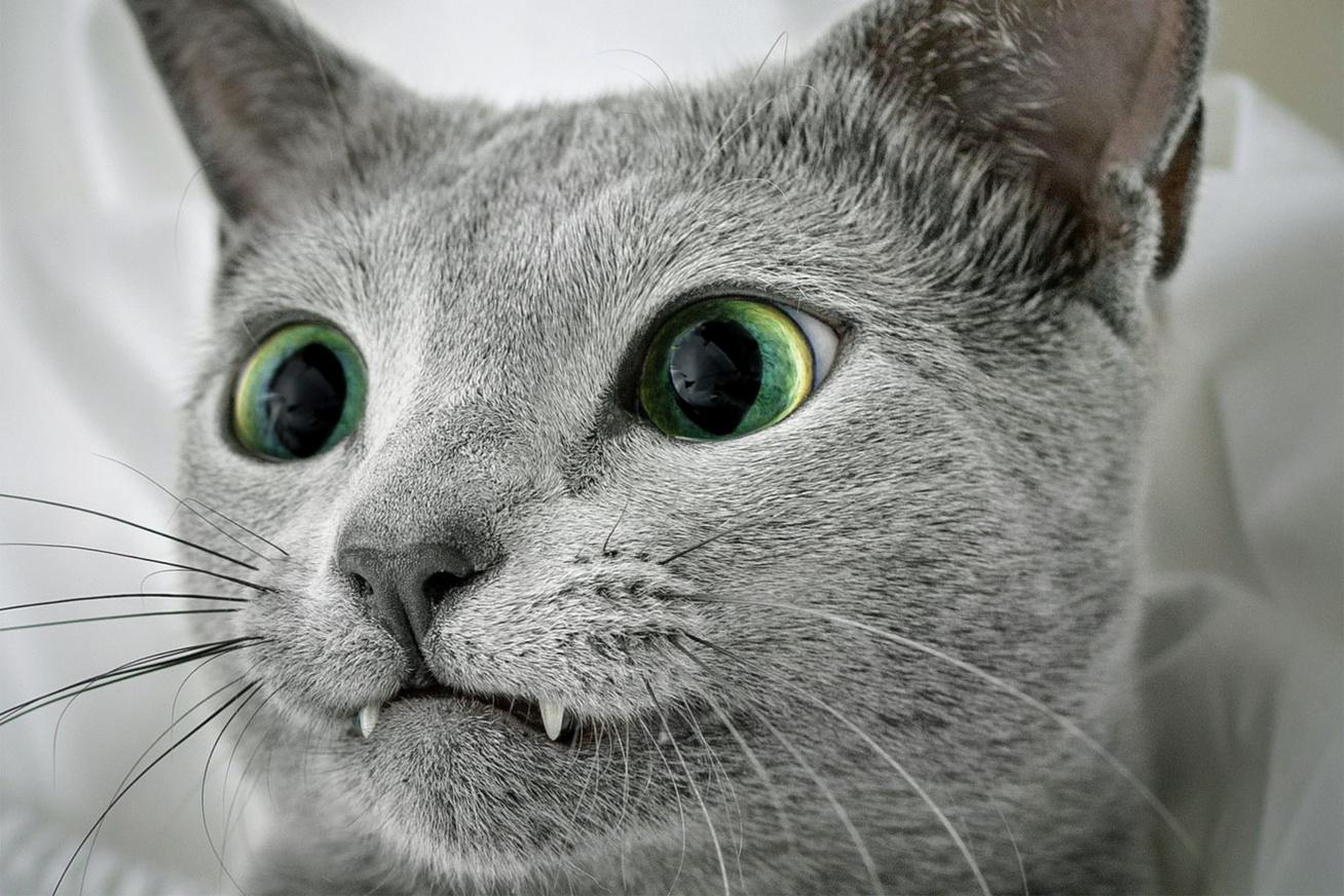 zold-szemu-cica
