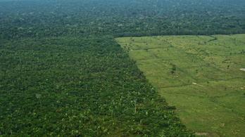 Milliárdokkal támogatták a németek a brazil esőerdők megmentését, de hiába, most felfüggesztik
