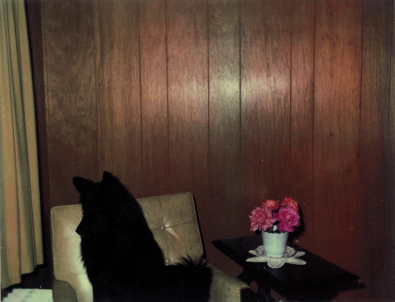 Egy New Yorki-család  az évek során rengeteg képet készített fekete kutyájukról. Egy gond volt csak, a kedvencük a legtöbb képen csak egy fekete paca, ugyanis a kamerájuk alkalmatlan volt egy szép napnál csak egy kicsit is sötétebb fényviszonyok közötti fényképezésre.