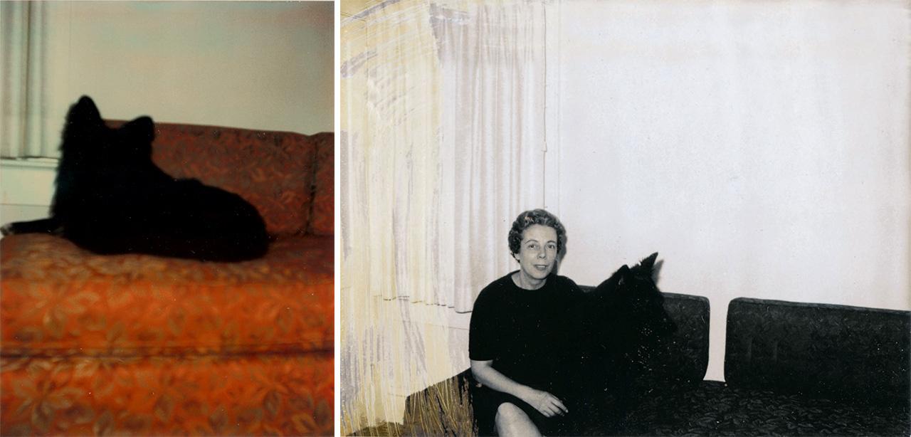 """""""Mégis az eredmény egy rakás gyönyörűen elhibázott kép, melyeken a családi kedvenc titokzatos és jelentőségteljes homályba burkolózik. A képeket nézve - a folyamatos mosolygás mellett - már szinte minket is gyötör a kíváncsiság, hogy vajon látni fogjuk-e valaha ezt a fekete kutyahőst, amikor egyszercsak hirtelen felbukkan a sorozat végén"""" - nyilatkozta Kessel a Szinte minden képen sorozat kilencedik gyűjteményéről."""