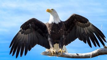 A Trump-kormány a veszélyeztetett fajokat védő törvény gyengítésére készül