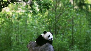 10 faj, amit a kihalás szélére sodort az emberiség
