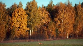 WWF: 50 év alatt a felére csökkent az erdőben élő gerinces állatok száma