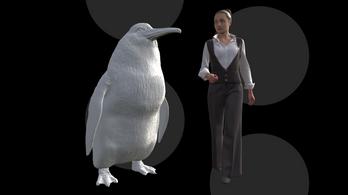 Emberméretű pingvin maradványait fedezték fel Új-Zélandon