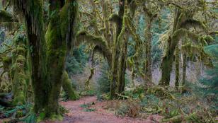 Nézegess gyönyörű és különleges erdőket a világ minden tájáról!