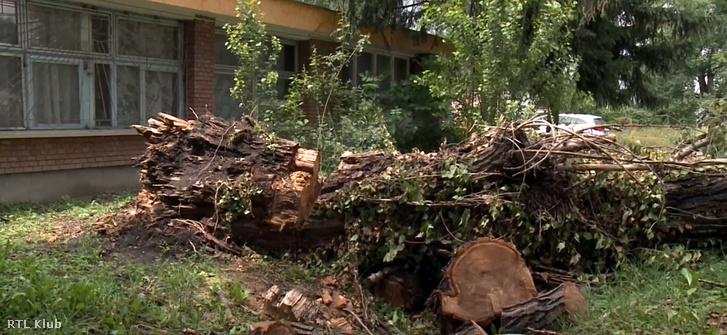 A viharban kidőlt, halálos balesetet okozó, negyven méteres fa darabjai hevernek az út mentén Dombóváron.