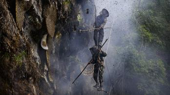 Az életüket kockáztatják a folyékony aranyért a mézvadászok