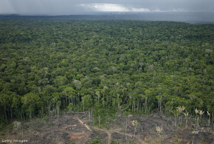 Erdőirtás Brazíliában.