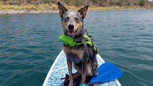 SUP-ozás kutyával: bemutatjuk a legújabb őrületet!