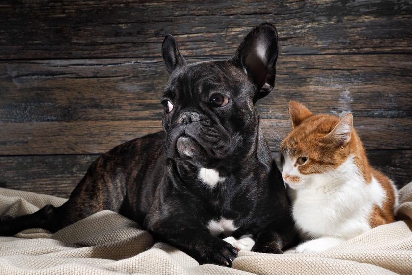 A legtöbb kutya és macska retteg tőle: mit tegyél gazdiként a tűzijáték idején?