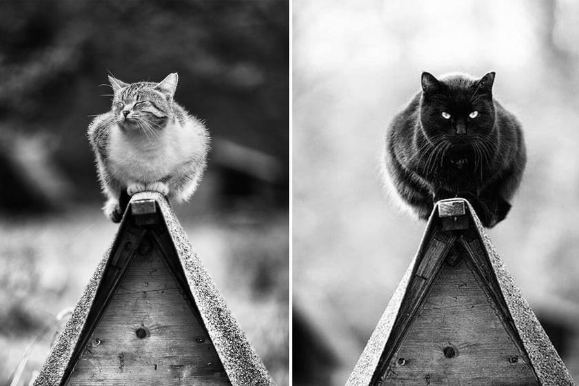 Ezért van 9 életük a macskáknak: olyasmit tudnak, amire csak kevesen képesek