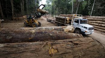 Norvégia is felfüggesztette a brazil őserdővédelmi segélyeket