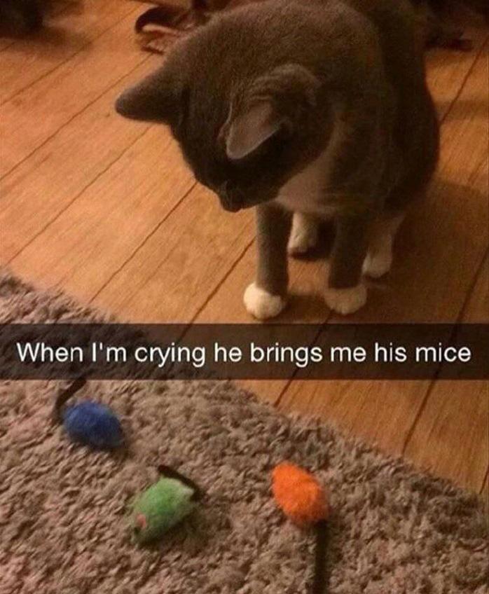A cica akárhányszor csak sírni látja gazdiját, rögtön odaviszi neki a kedvenc játékegerét, hogy megvigasztalja őt az ajándékkal.
