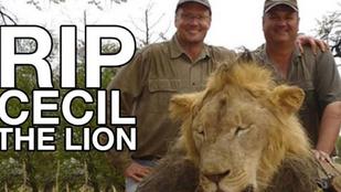 A veszélyeztetett állatok trófeavadászatának betiltását követelik európai parlamenti képviselők