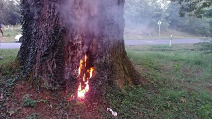 Felgyújtották Patkó Bandi fáját, a 300 éves tölgyfa nem élte túl