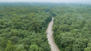 Ökológiai katasztrófa: 2,5 millió fát vágnak ki az új nepáli repülőtér építése miatt
