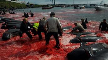 A brazil elnök egy dán bálnamészárlásról készült fotókkal vágott vissza a norvégoknak