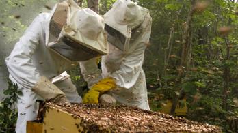 Több mint 500 millió méh pusztult el Brazíliában három hónap alatt