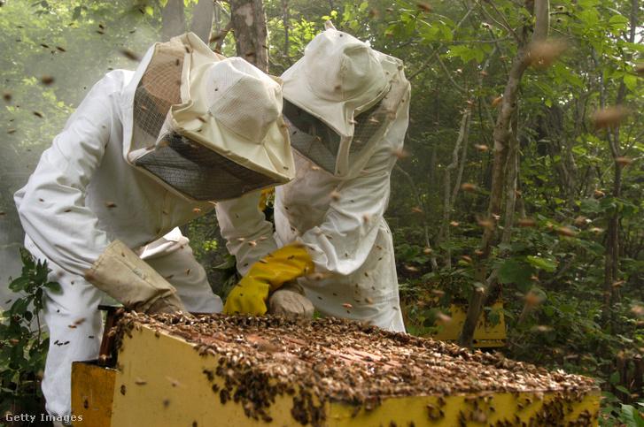 Méhészek a braziliai Lagoa Da Caridadében
