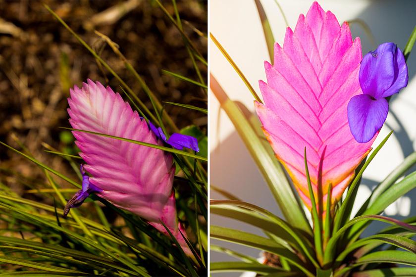 10 csodaszép, mégis igénytelen szobanövény: ha öntözésre is alig jut időd