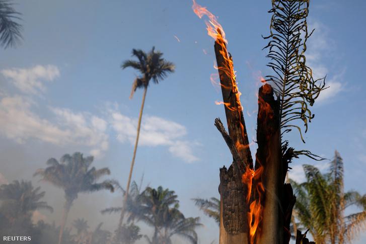 A farmerek felégetéssel tisztítják meg a földjeiket az Amazonas területén 2019. augusztus 20-án.