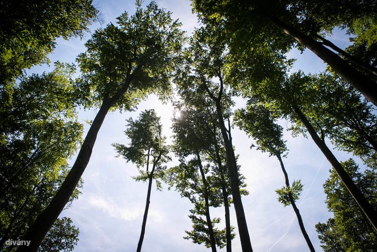 Kiemelkedő értéket képviselnek a Bakony hegység természetközeli erdőtársulásai, melyeket emberi beavatkozás csak kis mértékben érintett, ezáltal megőrizték viszonylagos eredetiségüket, illetve megteremtik a gyakoribb fajok mellett számos védett, illetve fokozottan védett növény- és állatfaj életfeltételeit is