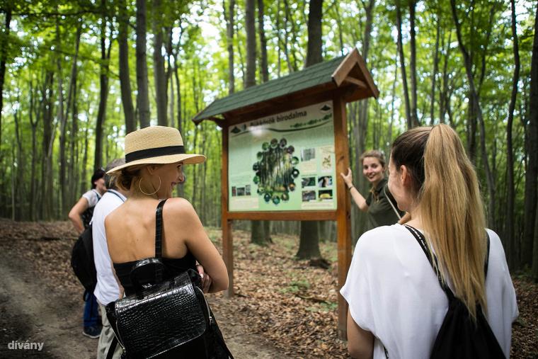 A Hubertlaki tanösvény útvonalán sok információt és érdekességet tudhatunk meg a környék élővilágáról, az erdészek munkájáról, az erdőgazdálkodásról, valamint természetes és épített környezetünkről.