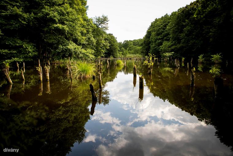 ...a Hubertlaki-tó, népies nevén a bakonyi Gyilkos-tó