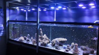Van remény a korallok megmentésére