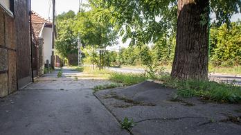 Folytatják a Szentendrei út felújítását, de egyelőre nem nyúlnak a fákhoz
