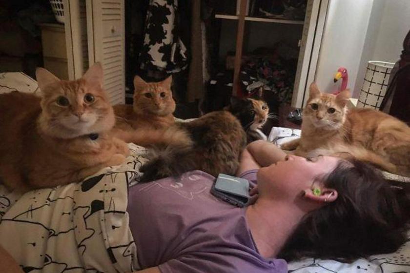 """Ez történik, ha elalszik az ember reggeliidőben: az """"éhező"""" cicák körbevették a gazdit, és igyekeznek minél hamarabb felébreszteni, hogy jelezzék, késik a finomságok tálalásával."""