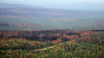 Már egy magyarországnyi terület pusztult el idén az orosz erdőtüzekben