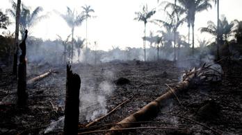 Miért az egész világ ügye, ha lángol a brazil esőerdő?