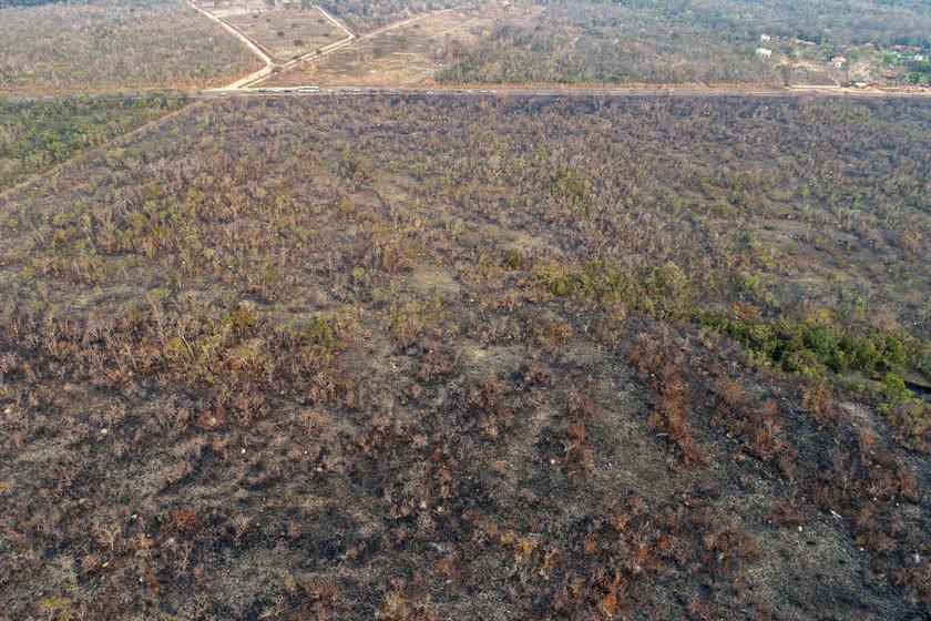 Légi felvétel az erdőtűz által felperzselt növényzetről.