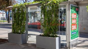 Bécsben már a buszmegállók is bezöldülnek