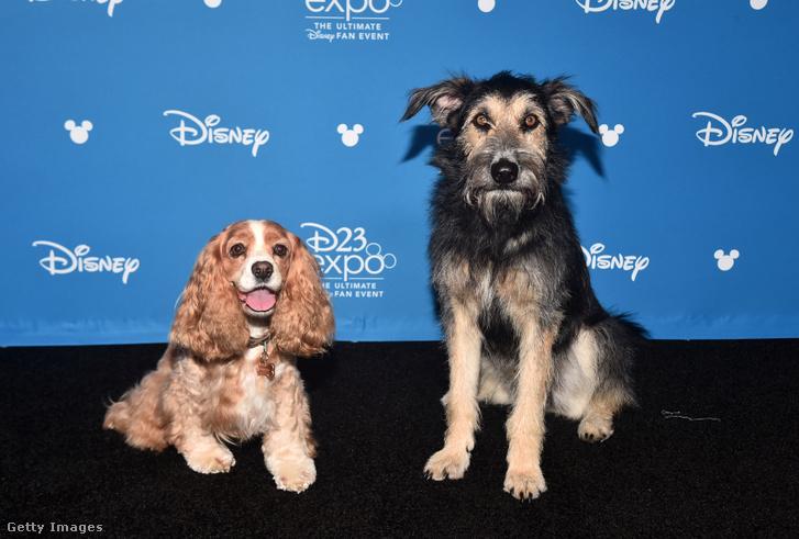 Susi és Tekergő (Lady and Tramp) a Disney+ bemutatóján 2019. augusztus 23-án