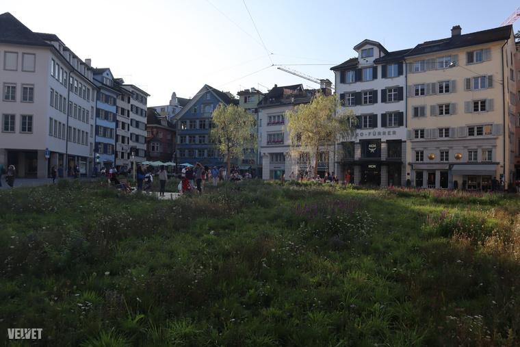 Egyrészt ideiglenesen beborították fűvel a teret, sőt, két fát is kiraktak
