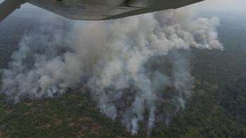 Ferenc pápa: Az amazonasi esőerdő bolygónk tüdeje
