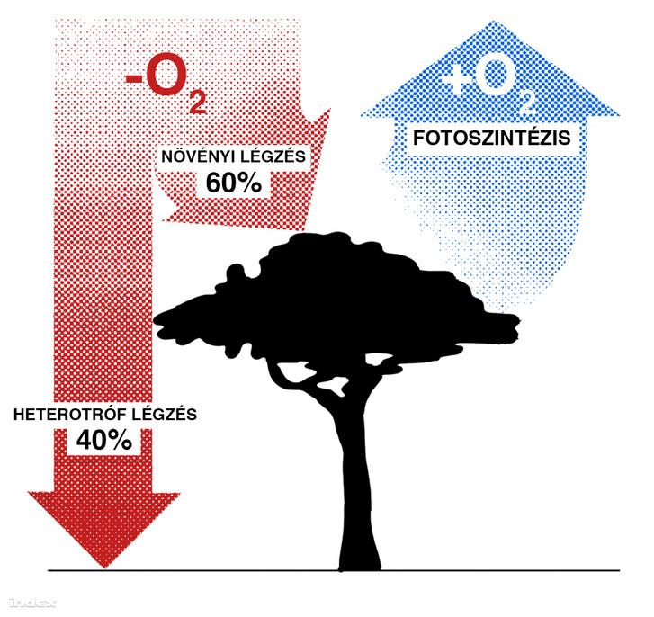 amazonas infograf