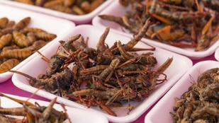 Miért is kéne nekünk rovarokat enni? Elmondjuk!