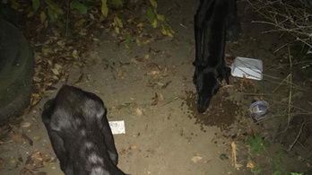 Kiéheztetett kutyák tetemei terítették be egy hernádnémeti nő udvarát